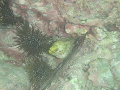 diving20090812_1.jpg