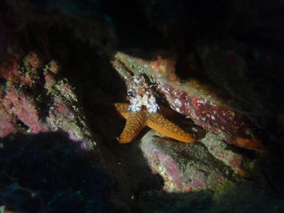 diving20110814_9.jpg
