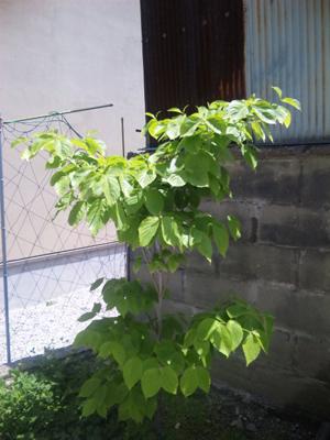 ikkodate20100516_1.jpg
